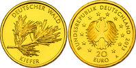 """20 Euro 2013 A Deutschland Serie """"Deutscher Wald"""" - Kiefer pp.  230,00 EUR  zzgl. 9,90 EUR Versand"""