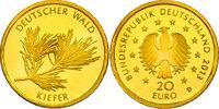 """20 Euro 2013 D Deutschland Serie """"Deutscher Wald"""" - Kiefer pp.  230,00 EUR  zzgl. 9,90 EUR Versand"""
