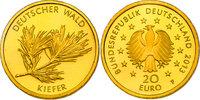 """20 Euro 2013 F Deutschland Serie """"Deutscher Wald"""" - Kiefer pp.  230,00 EUR  zzgl. 9,90 EUR Versand"""